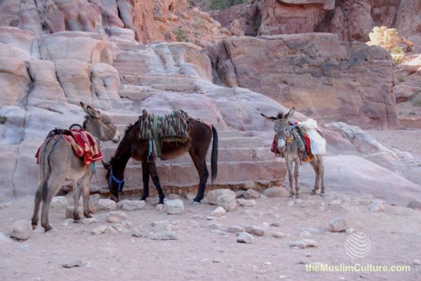 jordan-petra-pictures15