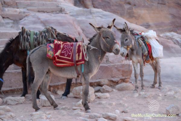 jordan-petra-pictures16