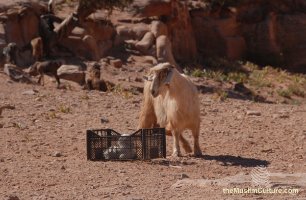 jordan-petra-pictures52