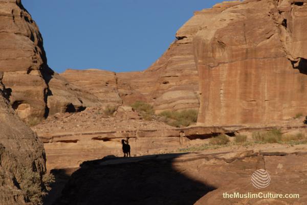jordan-petra-pictures7