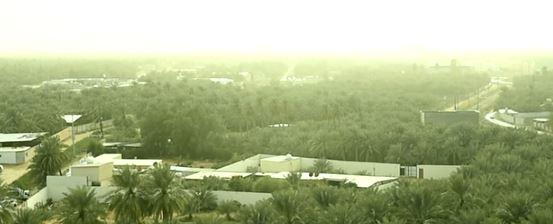 Aerial view of the oasis in Hofuf, Saudi-Arabia