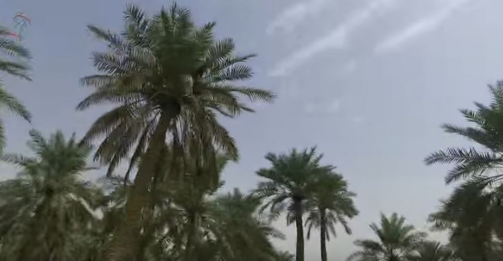 Palm trees in the Oasis of Hofuf